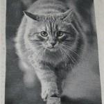вышивка крестом кота